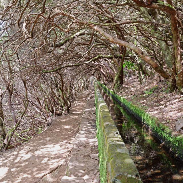 """Levada of Madeira , Portugal"" stock image"