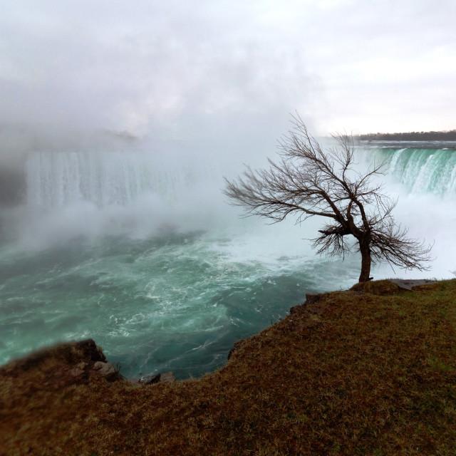 """Tree at Niagara Falls in Canada"" stock image"