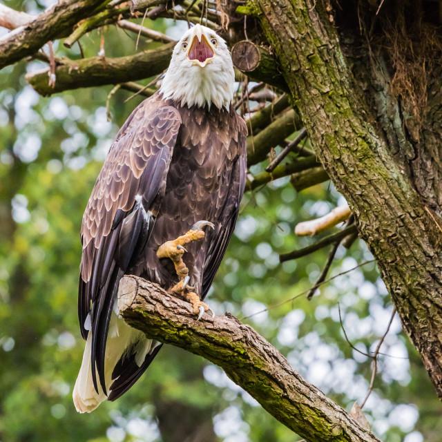 """""""Eagle [1]"""" stock image"""