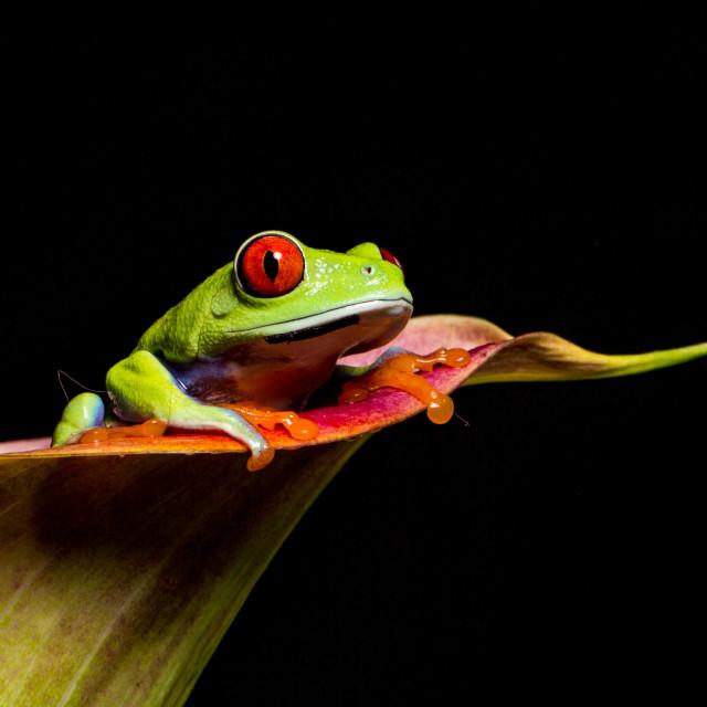"""""""Flower frog"""" stock image"""
