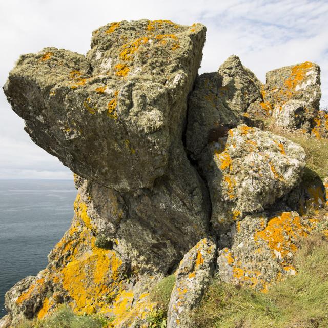 """Lichen on rock above the sea cliffs near Mullion Cove, Cornwall, UK."" stock image"