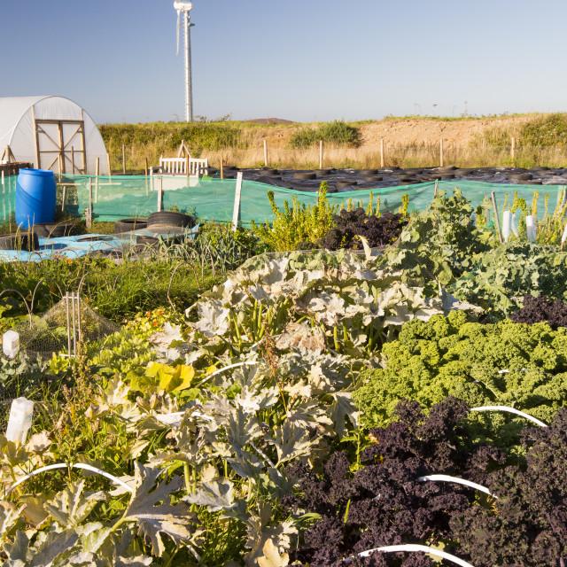 """The organic community garden at Mount Pleasant Ecological Park, Porthtowan,..."" stock image"