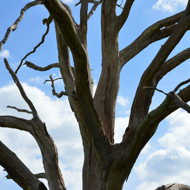"""Dead tree."" stock image"