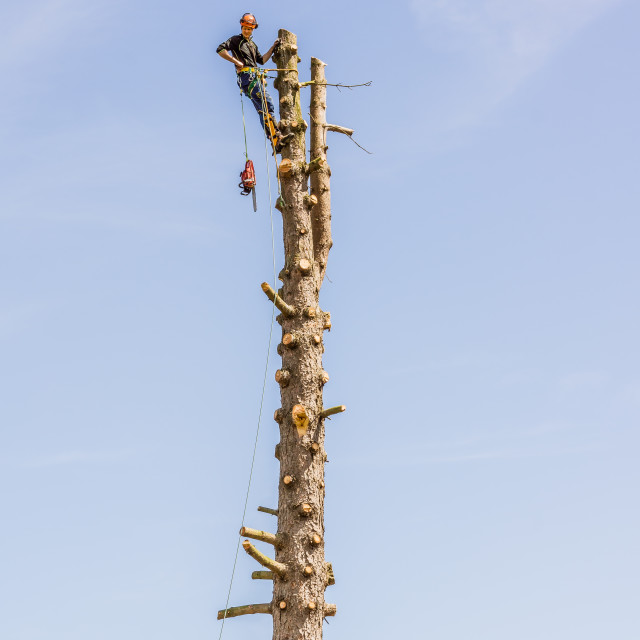 """""""Arborist working with a chainsaw in the top of a tree trunk"""" stock image"""