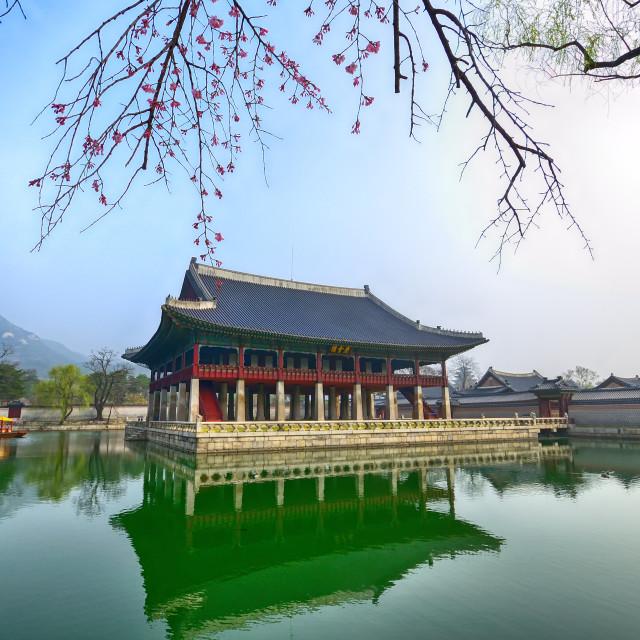 """Sakura or Cherry blossom at Gyeongbokgung palace in Seoul, South Korea."" stock image"