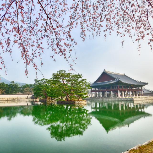 """Spring in Gyeongbokgung palace in Seoul, South Korea."" stock image"