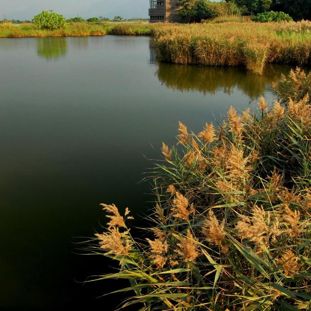 """""""Wetland Park, Hong Kong"""" stock image"""