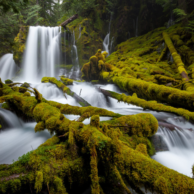 """Forest Waterfall"" stock image"