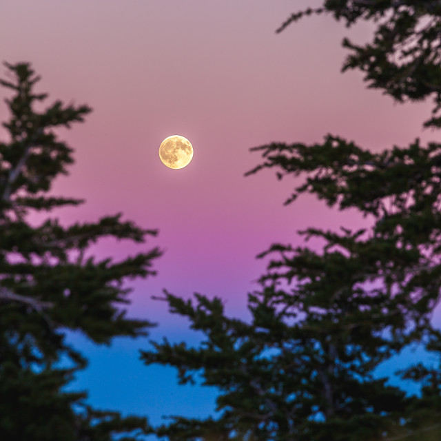 """Moonrise at Sunset"" stock image"