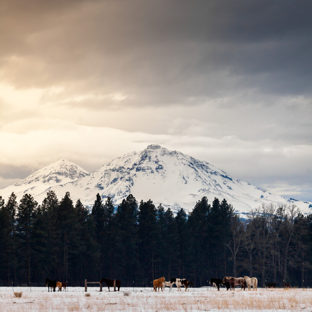"""Winter Horses and Mountains"" stock image"