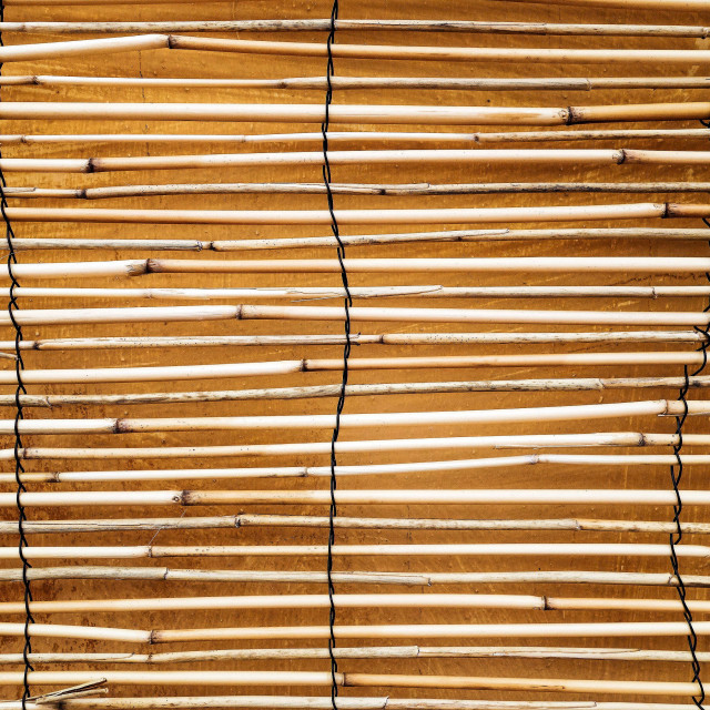 """""""Bamboo Fencing"""" stock image"""