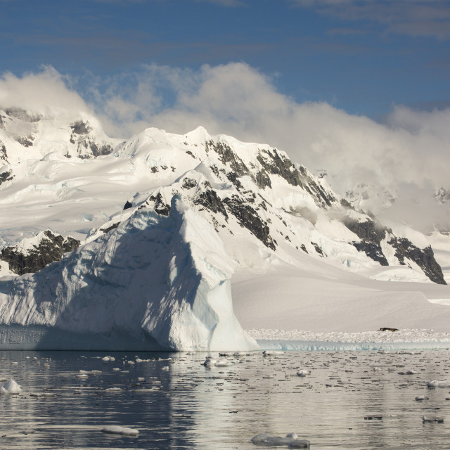 """""""A Weddell Seal hauled out on an iceberg in the Gerlache Strait separating the..."""" stock image"""