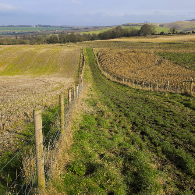 """""""Chalk landscape view to Lansdowne monument, Cherhill, North Wessex Downs,..."""" stock image"""