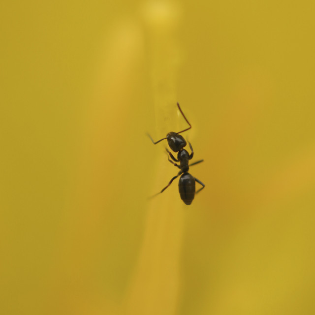 """""""Close up of an ant"""" stock image"""