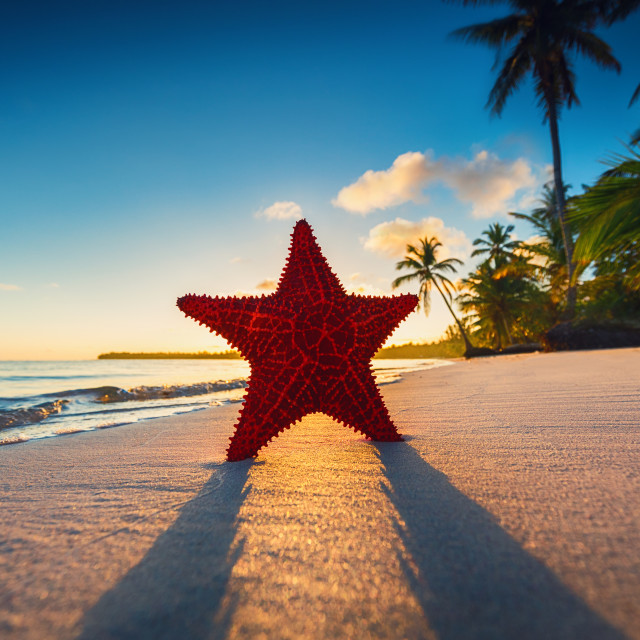 """""""Starfish on the beach with palm trees at sunrise"""" stock image"""