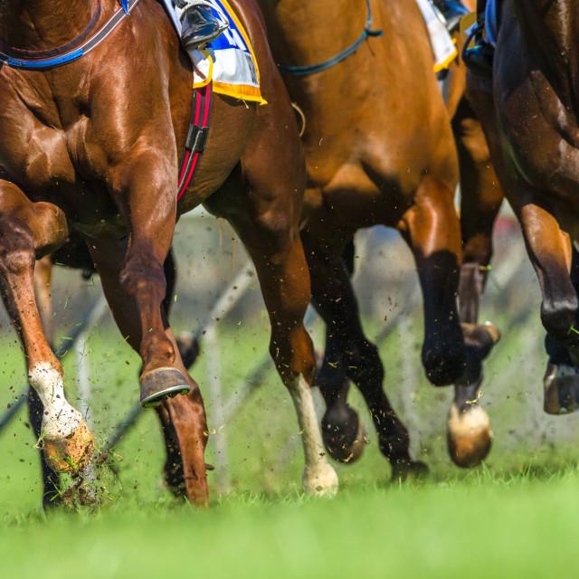 """""""Horses Jockeys Racing"""" stock image"""