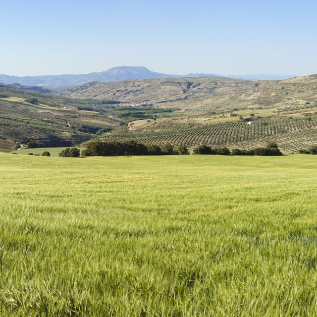 """Green grass in the rolling hills of El Temple in Granada province, Andalusia, Spain"" stock image"