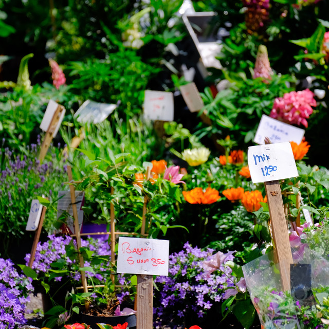 """flowers and plants being sold at market in amsterdam"" stock image"