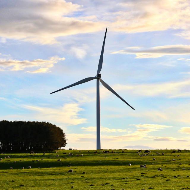 """""""Northumberland Windfarm at sunset"""" stock image"""
