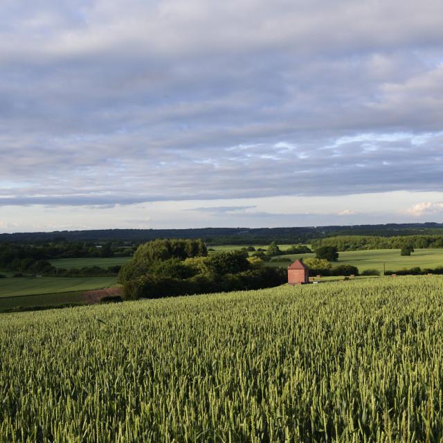 """""""UK Weather:Evening sunshine in Nottinghamshire."""" stock image"""