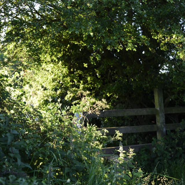 """Evening sunshine in Nottinghamshire."" stock image"