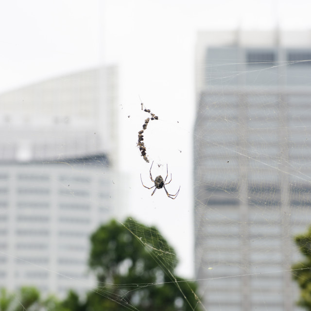 """Spider in the City"" stock image"