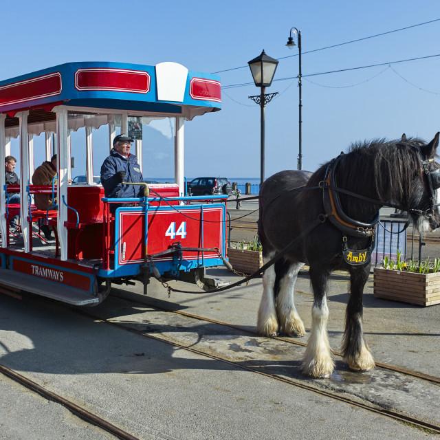 """""""Horsedrawn tram number 44 on Douglas Prom, Isle of Man with horse Amby"""" stock image"""