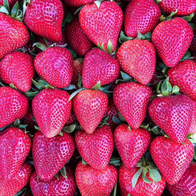 """Luscious Strawberries"" stock image"