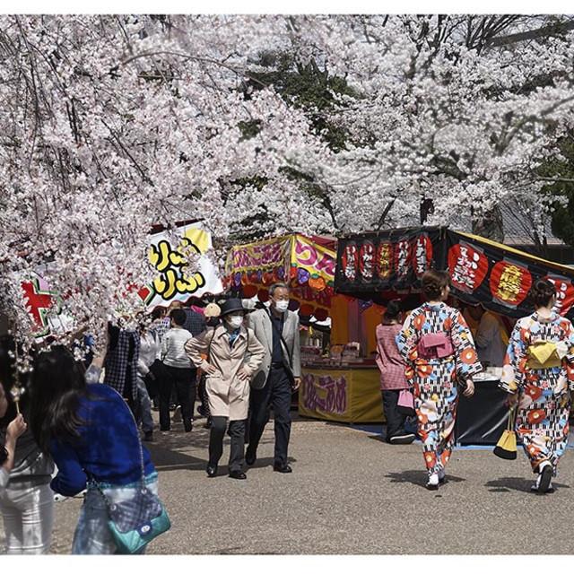 """""""Japan during spring"""" stock image"""