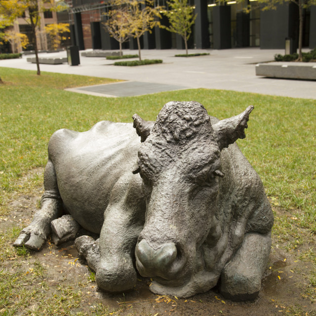 """Cows sculpture on a park in the city center of Toronto"" stock image"