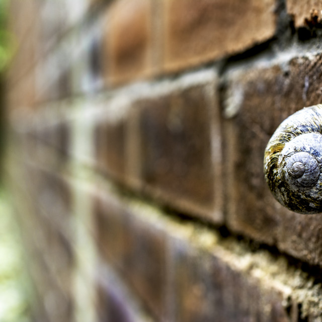"""""""Snail on a wall"""" stock image"""