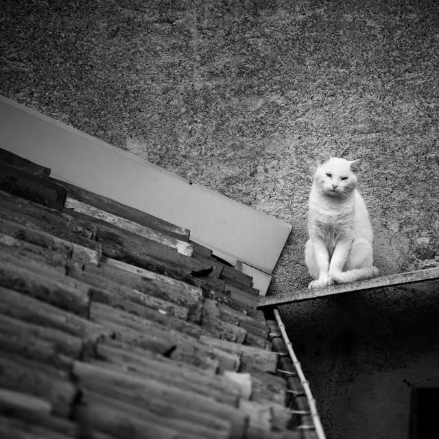 """""""Cat Walker"""" stock image"""