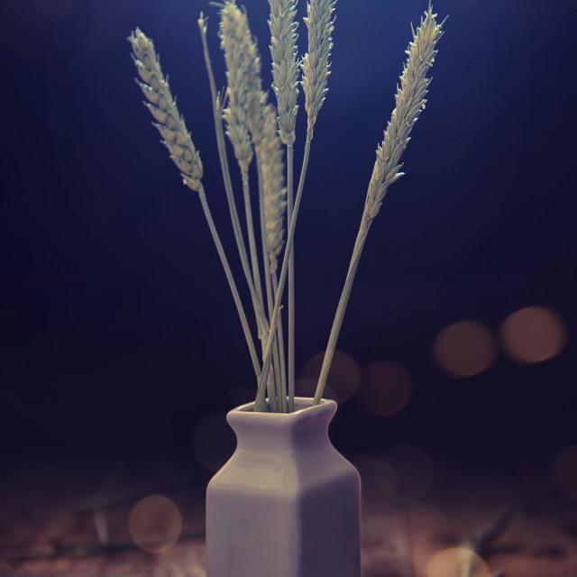 """""""Spighe di grano"""" stock image"""