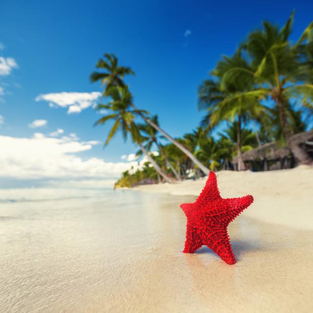 """Seastar or sea starfish standing on the island"" stock image"