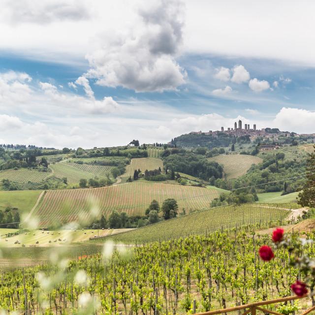 """A vineyard view of San Gimignano, Tuscany, Italy"" stock image"