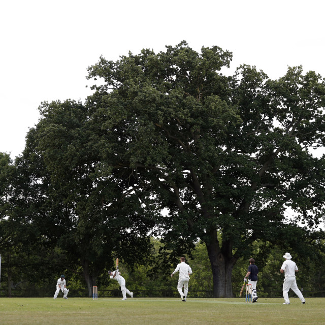 """Village Cricket"" stock image"