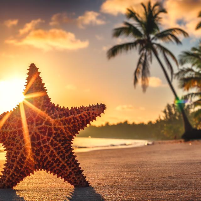 """Seastar or sea starfish standing on the beach."" stock image"