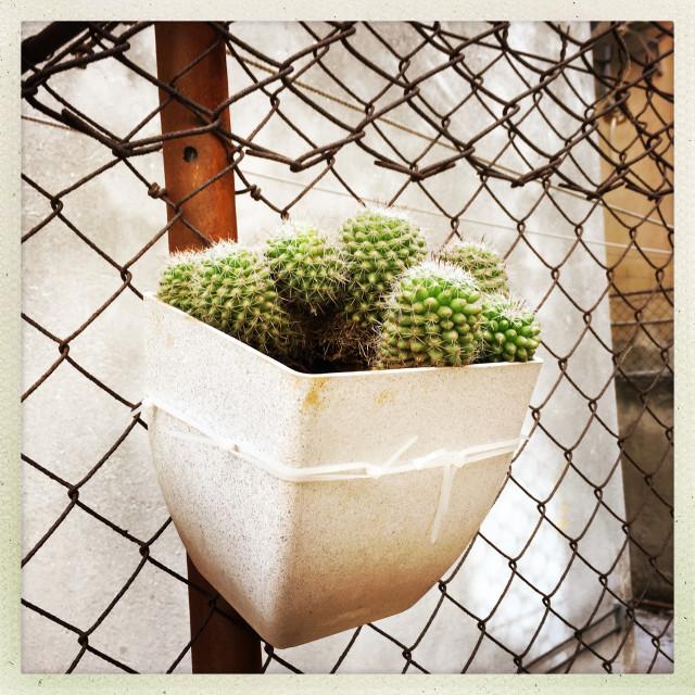 """""""Garden cactus"""" stock image"""