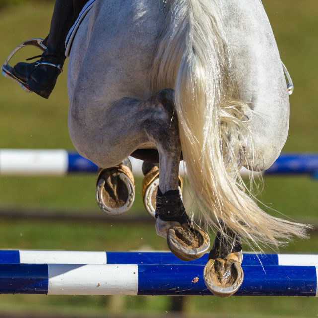 """Rider Horse Jumping Closeup Rear Hoofs"" stock image"