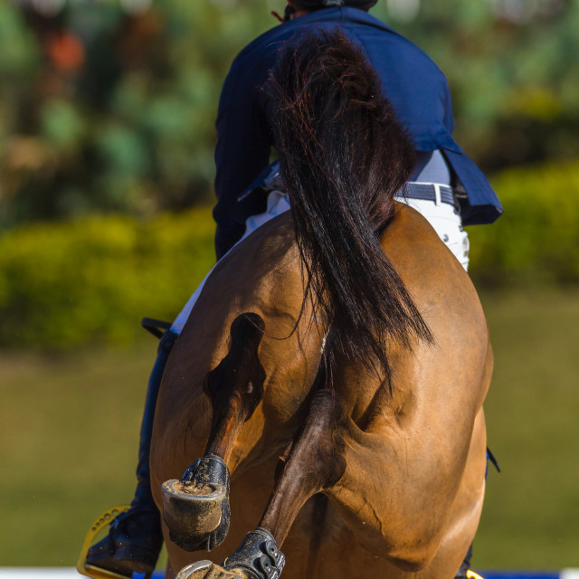 """Rider Horse Jumping Closeup Rear Hoofs"" stock image"