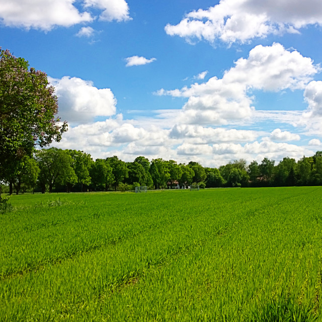 """Rural summer landscape"" stock image"