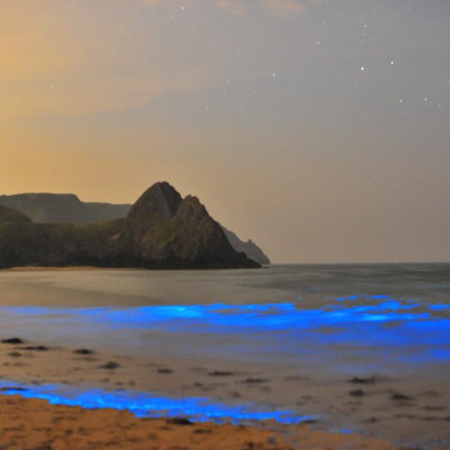 """""""Illuminescent Plankton"""" stock image"""