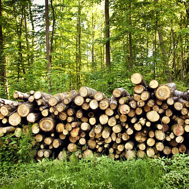 """pile of chopped down tree trunks stored on the woodland border"" stock image"
