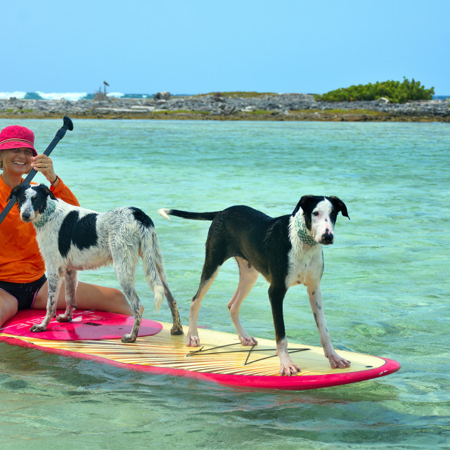 """Paddle boarding with dogs"" stock image"