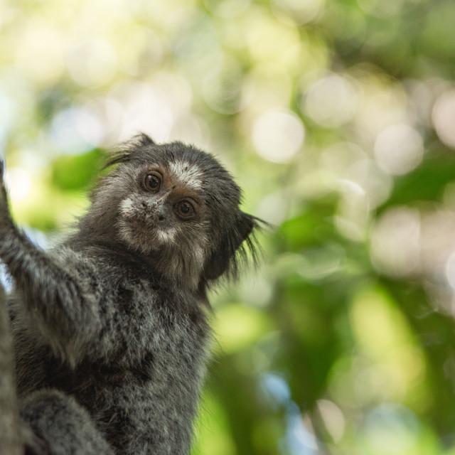 """""""Monkey Pose"""" stock image"""