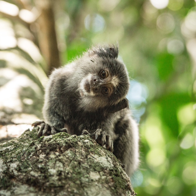 """Cute Monkey"" stock image"