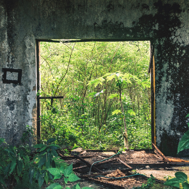 """Jungle Gate"" stock image"