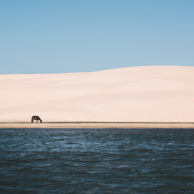 """""""Lonely Horse"""" stock image"""