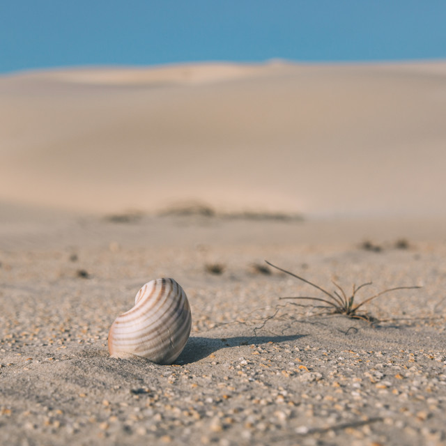 """Desert Shell"" stock image"