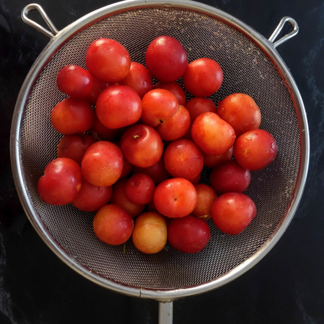 """""""Fresh Plums in a Colander"""" stock image"""